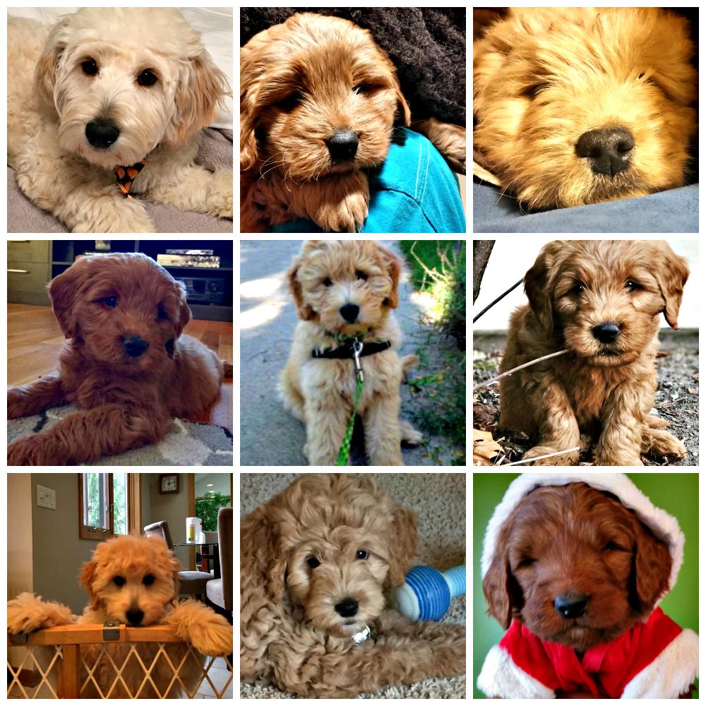 Puppies_1