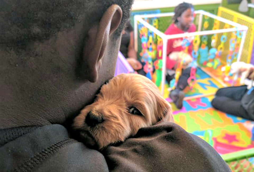 puppy play area_1