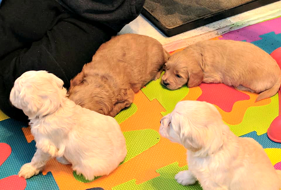 puppy play area_2