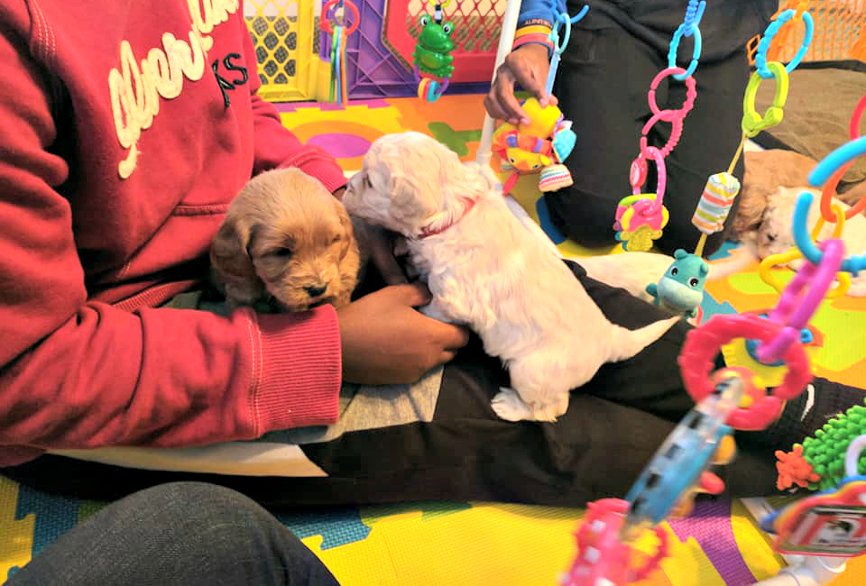 puppy play area_4