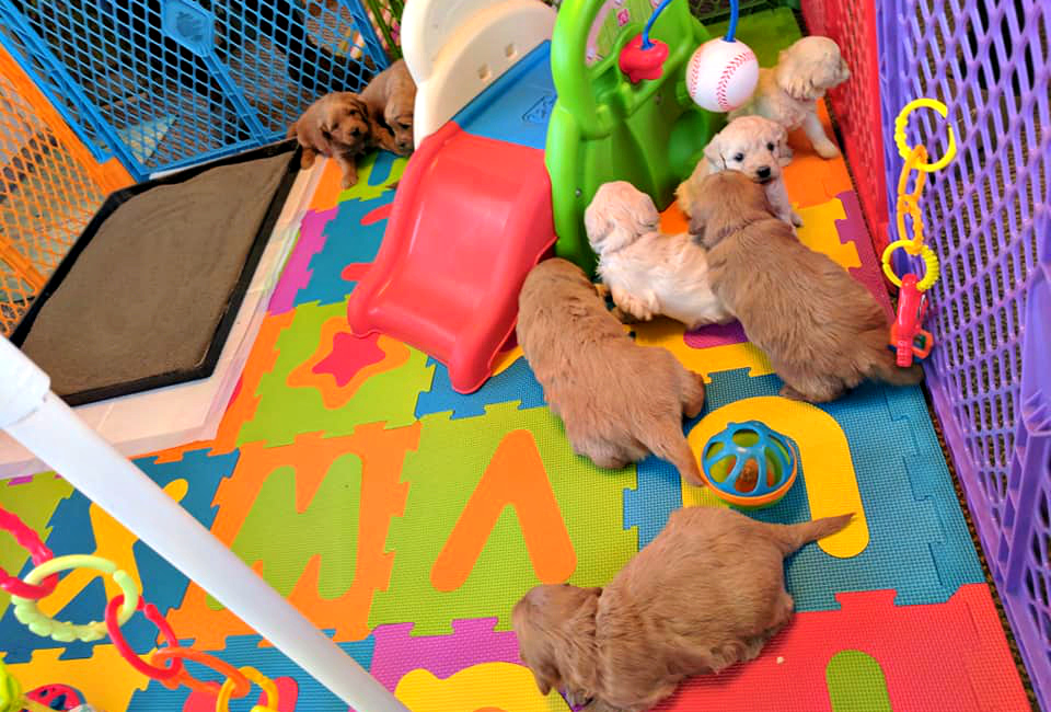 puppy play area_6