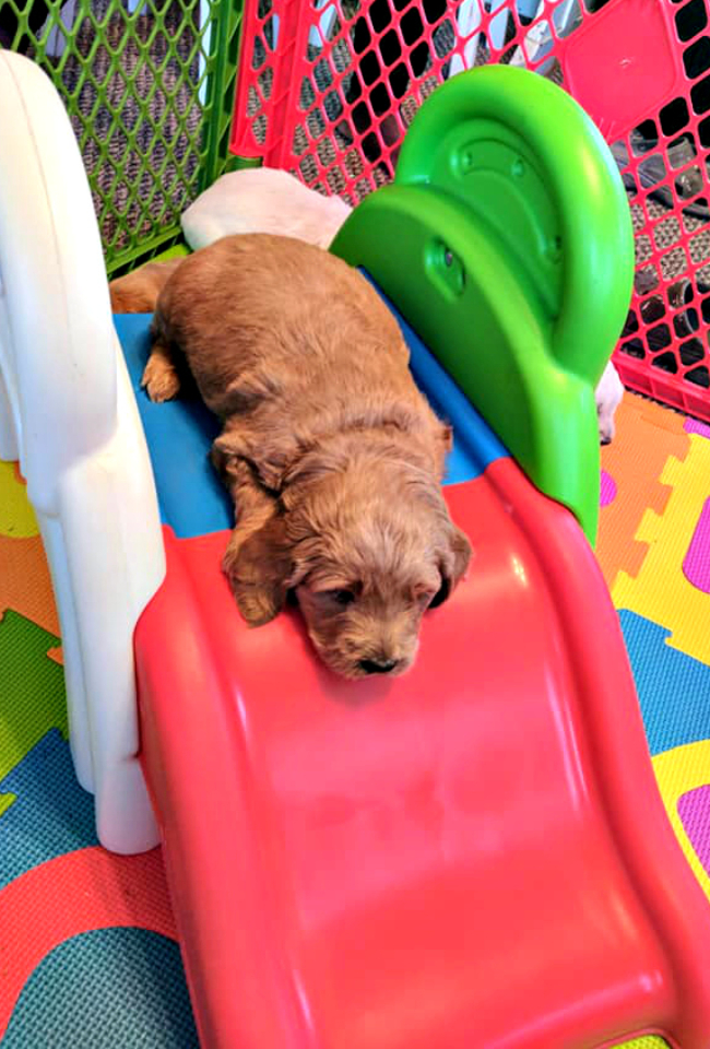 puppy play area_7