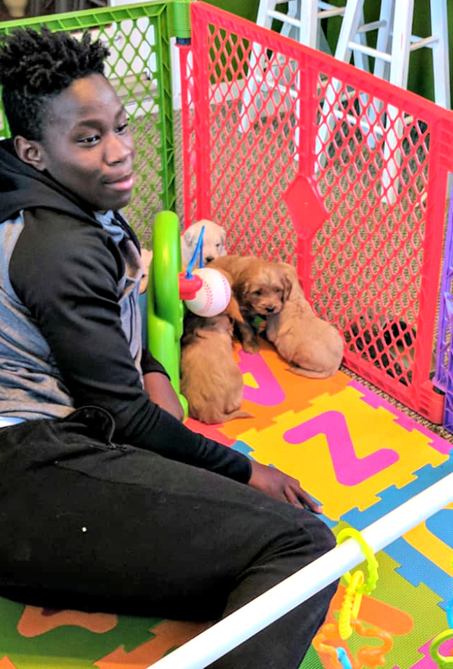 puppy play area_8