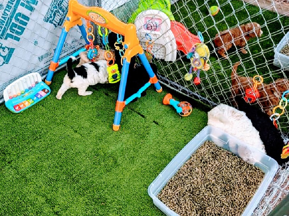 Doodle Dog Hill Play Area_1