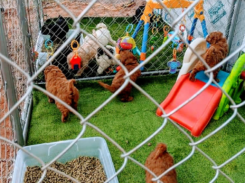 Doodle Dog Hill Play Area_3